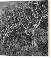 Florida Scrub Oaks Painted Bw  Wood Print