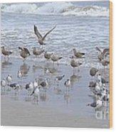Florida Seabirds Wood Print