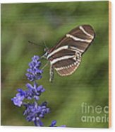 Florida State Butterfly Wood Print