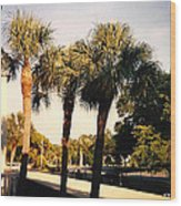 Florida Trees 2 Wood Print