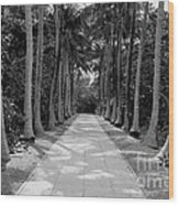 Florida Walkway Black And White Wood Print