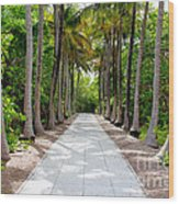 Florida Walkway Wood Print