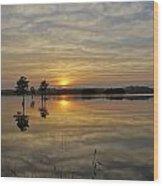 Florida Wetlands Wood Print