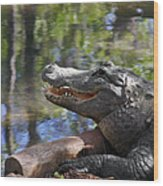 Florida - Where The Alligator Smiles Wood Print