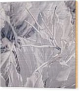 Florida Whites Wood Print