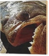 Flounder Face 2 10/26 Wood Print