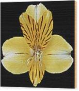 Flower 001 Wood Print