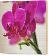 Flower 012 Wood Print