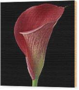 Flower 102 Wood Print