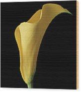 Flower 103 Wood Print
