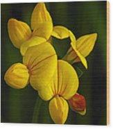 Flower 105 Wood Print