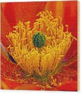 Flower 108 Wood Print