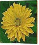 Flower 111 Wood Print