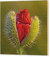 Flower 124 Wood Print