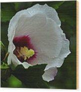 Flower 157 Wood Print