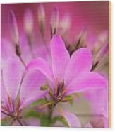 Flower 2 Wood Print