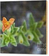 Flower 21 Wood Print