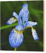 Flower 237 Wood Print