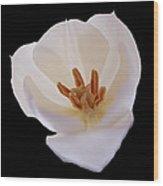 Flower 270 Wood Print