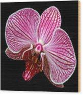 Flower 280 Wood Print