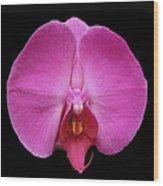 Flower 328 Wood Print