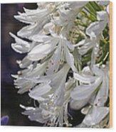 Flower-agapanthus-white-flora Wood Print