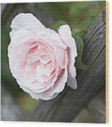 Flower Among The Fence Wood Print