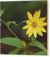 Flower And Bud Wood Print