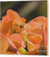 Flower And Ready To Fly Wood Print