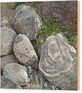 Flower And Rocks Wood Print
