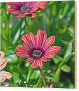 Flower Astra Outback Purple Art Prints Wood Print