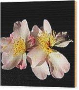 Flower Azalea. Wood Print