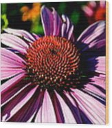 Flower Bed Close Up Wood Print