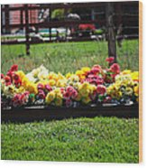 Flower Bed Wood Print by Holly Blunkall