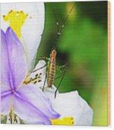 Flower Bug - I Wood Print