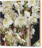 Flower Bunch Bush White Cream Strands Sensual Exotic Valentine's Day Gifts Wood Print