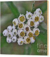 Flower Buttons Wood Print