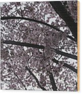 Flower Canopy And Sky Wood Print