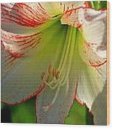 Flower Child Amaryllis Flower Art Wood Print
