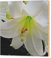 Flower Christmas Lily. Wood Print by Joyce Woodhouse