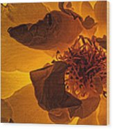 Flower Close Up IIi Wood Print