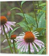 Flower - Cone Flower- Luther Fine Art Wood Print