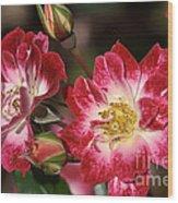 Flower-cream-pink-red-rose Wood Print