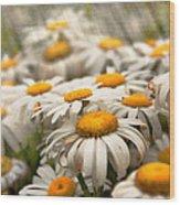 Flower - Daisy - Not Quite Fresh As A Daisy Wood Print