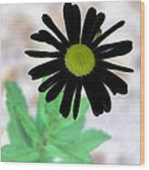 Flower - Daisy - Photopower 327 Wood Print