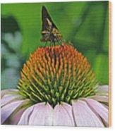 Flower Feeding Wood Print
