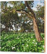 Flower Field - South Western Australia Wood Print