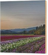 Flower Fields 2 Cropped Into A Standard Ratio Wood Print