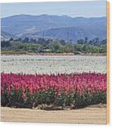 Flower Fields Of Lompoc Valley Wood Print