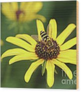 Flower Fly And Yellow Flowers Wood Print